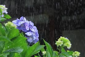 梅雨期の体調管理