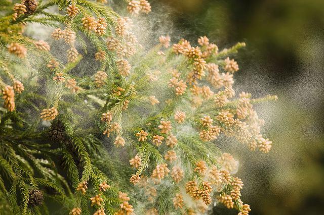 花粉症状を軽くするプラスαの工夫