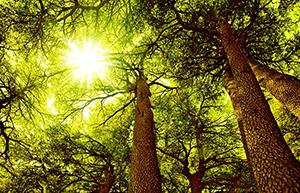 木を見て、森を見ず