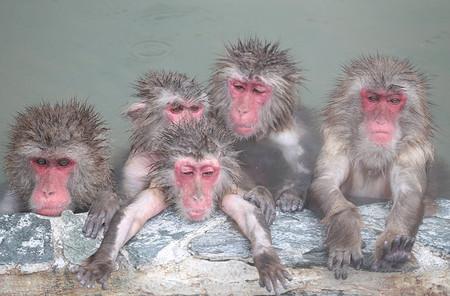 面白い類人猿診断、あなたはどのタイプ?