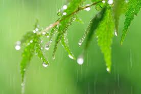 梅雨時期、身体の不調を予防しましょう
