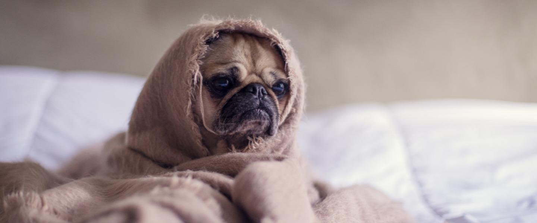 冷え症を改善して、風邪をひかない体へ