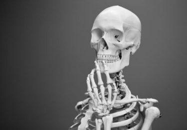 骨の健康を考える
